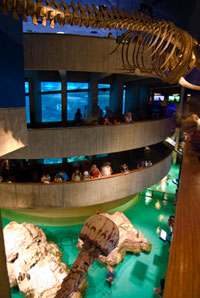 Aquarium Interior--the Giant Ocean Tank