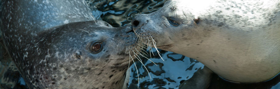 $250 will provide necessary vitamins for all the seals and sea lions for three months.